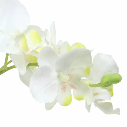 Orchidee bianche in vaso A35cm