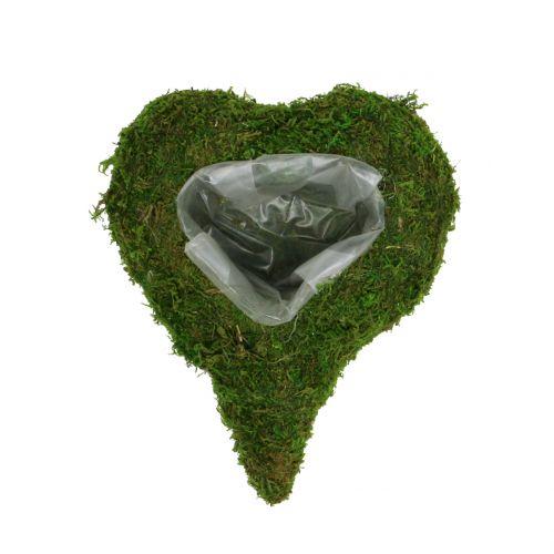 Muschio di cuore vegetale 23 cm x 19 cm