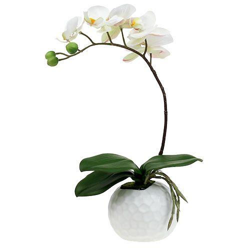Crema Phalaenopsis in vaso di ceramica 33cm