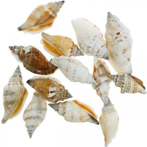Gusci di lumaca decorativi vuoti in una rete liberiana Lumache di mare 400g