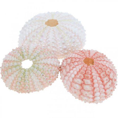 Decoro riccio di mare rosa marittimo, bianco, verde decoro estivo 12pz