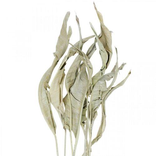 Foglie di Strelitzia essiccate verdi glassate 45-80 cm 10 pezzi