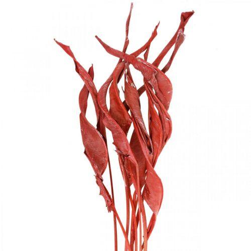 Strelitzia lascia fiori secchi glassati rossi 45-80 cm 10 pezzi