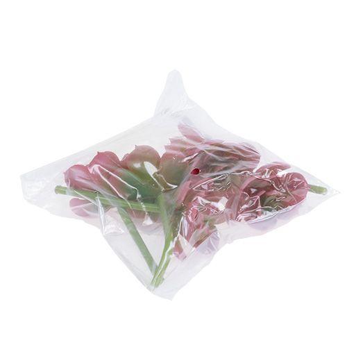 Succulente Ø5cm Rosa 6 pezzi