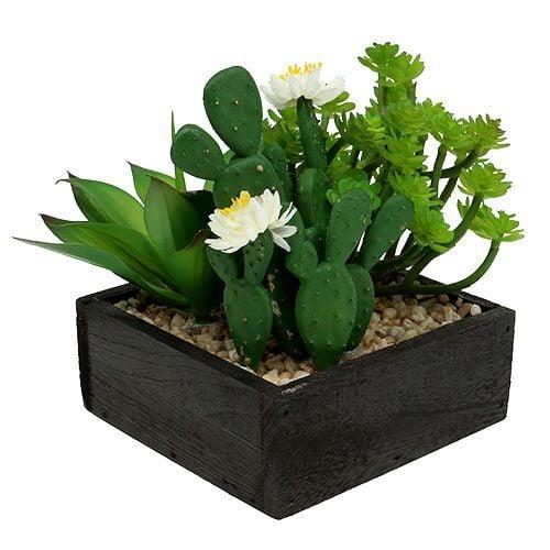 Succulenta in scatola di legno H14cm 1pc