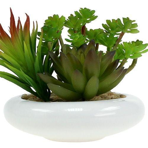 Piante grasse in vaso Ø12cm H11cm 1pc