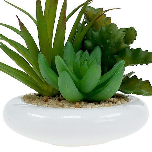 Piante grasse in vaso di ceramica Ø12cm