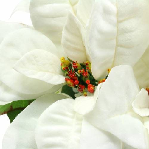 Poinsettia Bouquet bianco 52cm