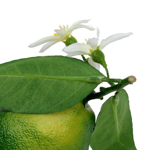 Limoni con fiore 9,5 cm verde 4 pezzi