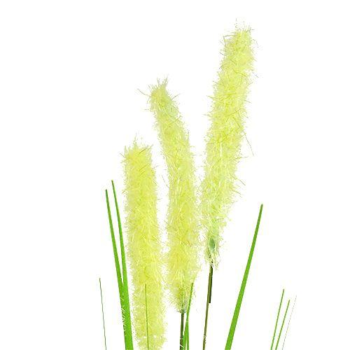Cipolla erba 68 cm verde 6 pezzi