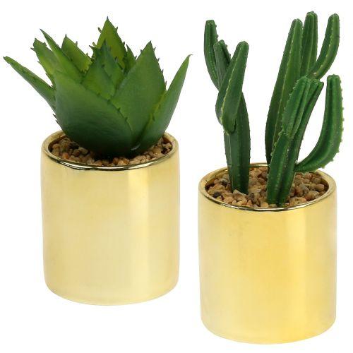 Cactus verde nel vaso d'oro 12 cm - 17 cm 4 pezzi