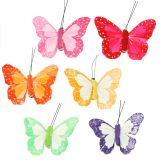 Farfalle di piume sulla clip colorate 7 cm 12 pezzi