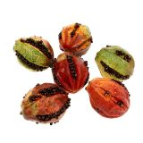 Frutti autunnali 3,5 cm rosso, marrone 24 pezzi