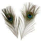 Piume di pavone 22 cm - 30,5 cm 12 pezzi