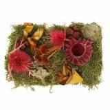 Miscela di fiori secchi con coni e decorazione autunnale rosso muschio 150g