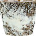 Vaso di betulla mini bianco Ø7cm H7cm