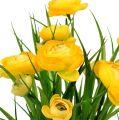Mazzo di ranuncolo con erba 35 cm giallo